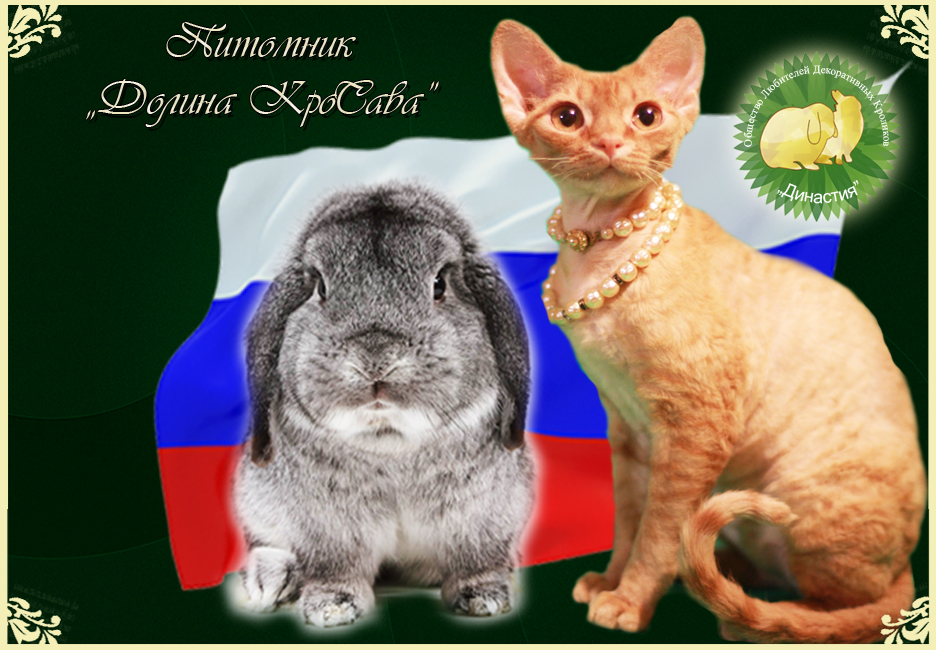 карликовые кролики: