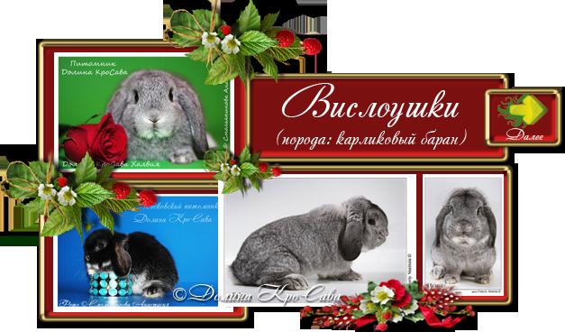 Кролики питомника: Карликовые барашки