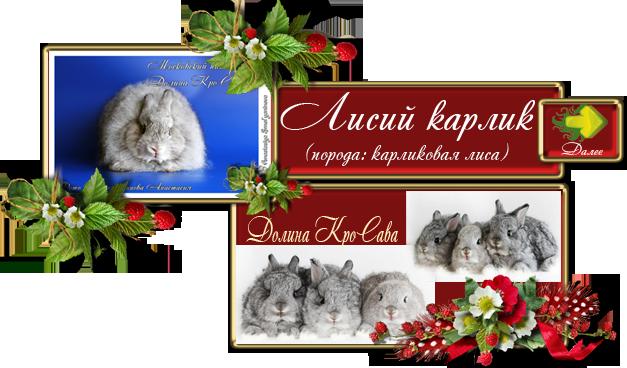Кролики питомника: Карликовая лиса