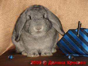 карликовые кролики:Демьян