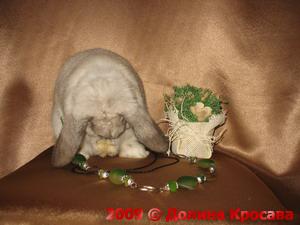 карликовые кролики: Мирабелла