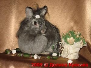 карликовые кролики: Ксениотта