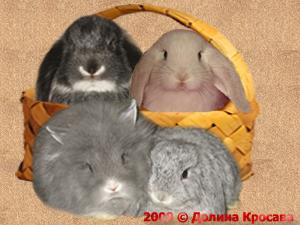 карликовые кролики: Карликовые кролики