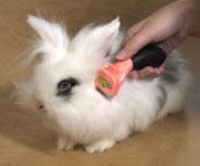 карликовые кролики: фурминатор