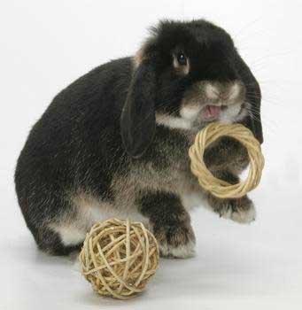 Игрушка для кролика.